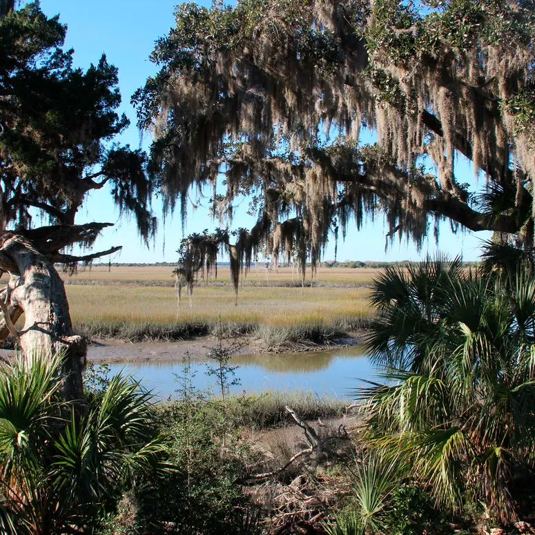 A saltwater marsh on Cumberland Island, Georgia Photo by: Education Images/Universal Images Group via Getty Images